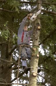 Tree-climber-V0001113