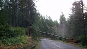 Mason Lake Dr W - tree on lines