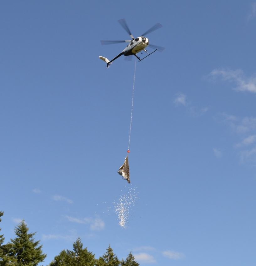 golf ball drop image