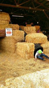 hunter-farms-hay-maze